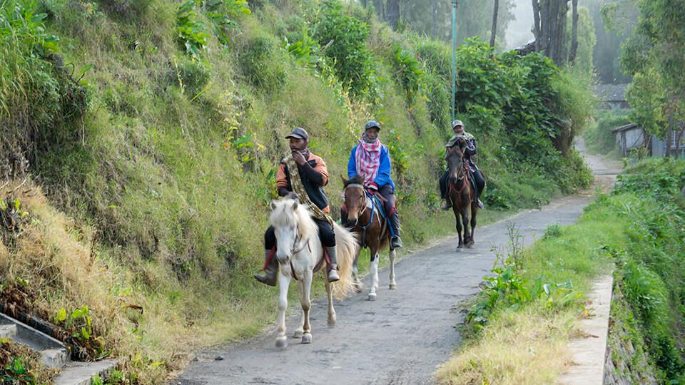 Berpapasan dengan para kuda dan penunggangnya saat jalan santai berkeliling desa Ngadisari.